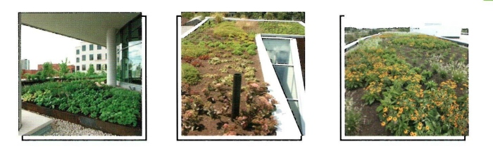 Come fare su di una terrazza un giardino pensile fai da te for Immagine idee per giardini