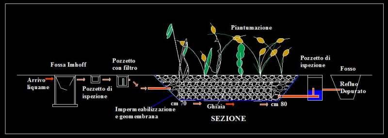 Fitodepurazione un sistema di trattamento efficace degli for Attivatore fossa biologica fai da te