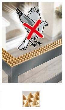 I piccioni sui davanzali delle nostre case come allontanarli for Scaccia piccioni leroy merlin