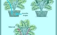 Come si coltivano le piante in casa. Elementi essenziali.
