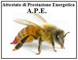 APE 1 1