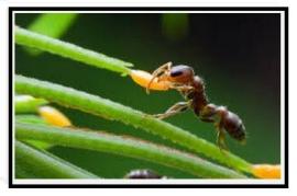 Le formiche delle piante dii appartamento 1 1