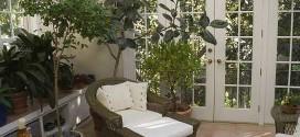 Accorgimenti per coltivare le piante in casa.