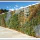 A Come creare il verde su pareti verticali e  recinzioni