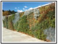 Come creare il verde su pareti verticali e  recinzioni 1