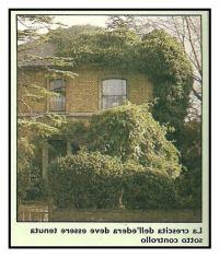 I danni che le piante possono apportare alla nostra casa 1