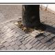 A Sistema innovativo contro i dissesti creati dalle radici degli alberi