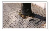 Sistema innovativo contro i dissesti creati dalle radici degli alberi 1