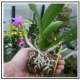 A Argilla espansa italiana prodotta specificamente per floricoltura, orticoltura e vivaismo