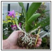 Argilla espansa italiana prodotta specificamente per floricoltura, orticoltura e vivaismo 1