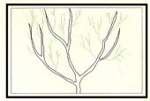 Gli alberi da frutto 1