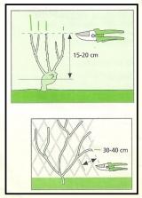 Tipi di potatura 1