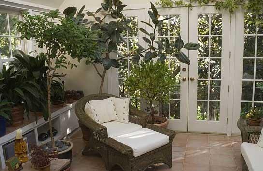 accorgimenti per coltivare le piante in casa